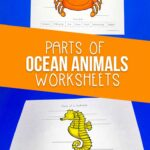 Parts of Ocean Animals Worksheets