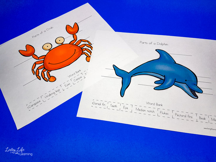 Parts of ocean animals printables
