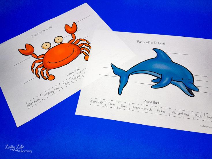 Parts of ocean animals printables