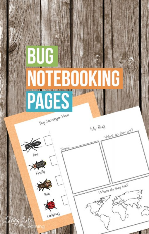 Out on a nature walk? These bug notebooking pages will help you research your favorite bug and learn more about them. Perfect for bug lovers.