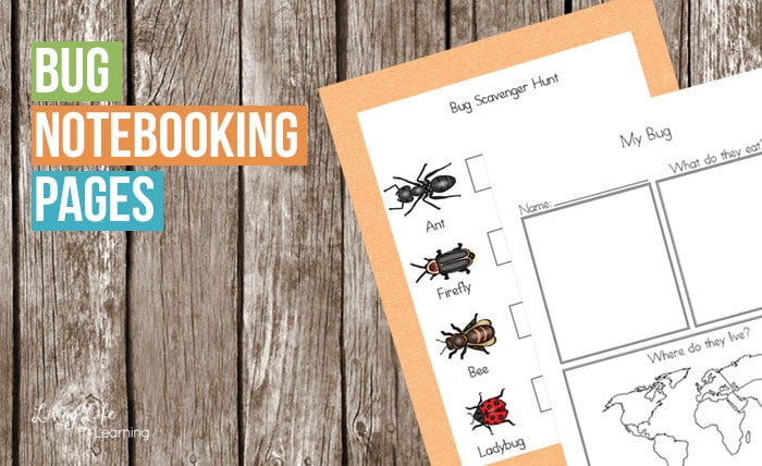Do you have an insect lover? These bug notebooking pages will help you research your favorite bug and learn more about them. Perfect learning activity for your next nature walk.