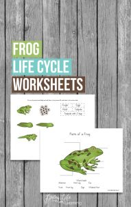 These Frog Life Cycle Worksheets will help you teach your kids all about frogs including the life cycle stages and the parts of a frog.