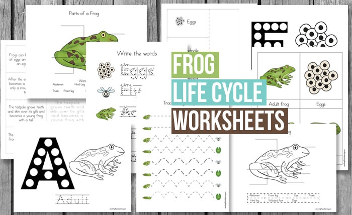 First grade science worksheets on the life cycle of a frog