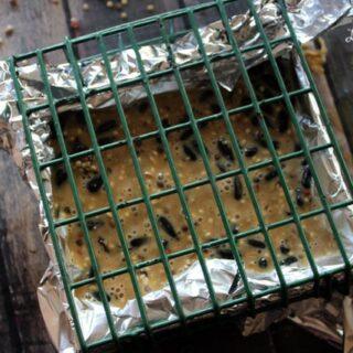 how to make a suet bird feeder