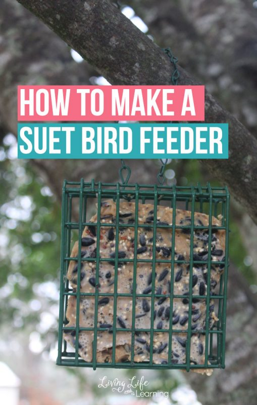 Study the birds in your own backyard and get them to visit and see how to make a suet bird feeder at home with only a few ingredients.
