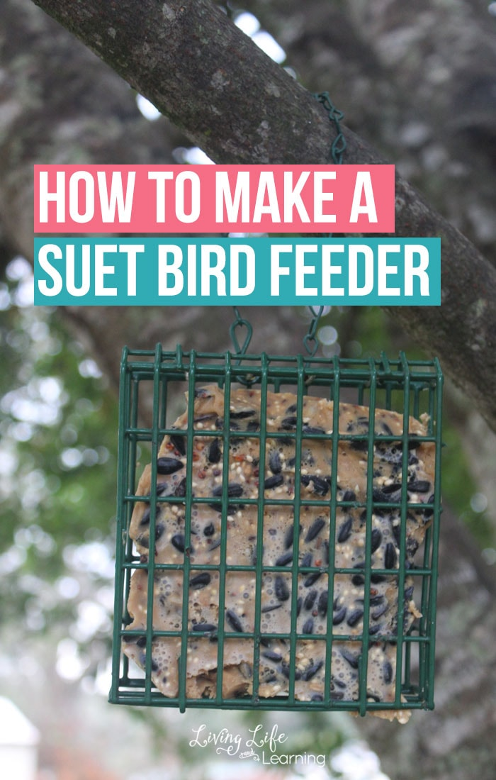 Do you have bird lovers? Study the birds in your own backyard and get them to visit and see how to make a suet bird feeder at home with only a few ingredients.