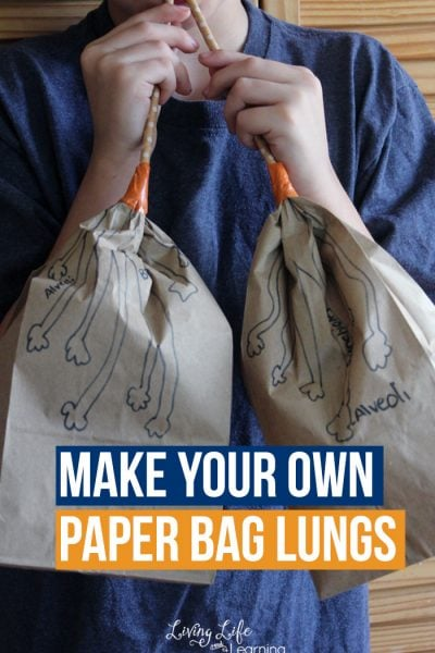 Make your own paper bag lungs activity - Learn about the human body and see how the lungs work and the correct names for their anatomy.