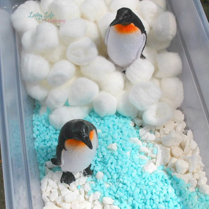 Penguins in a sensory bin with cotton balls and white and blue gravel