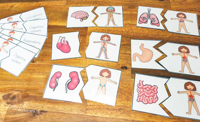 puzzles of the human body