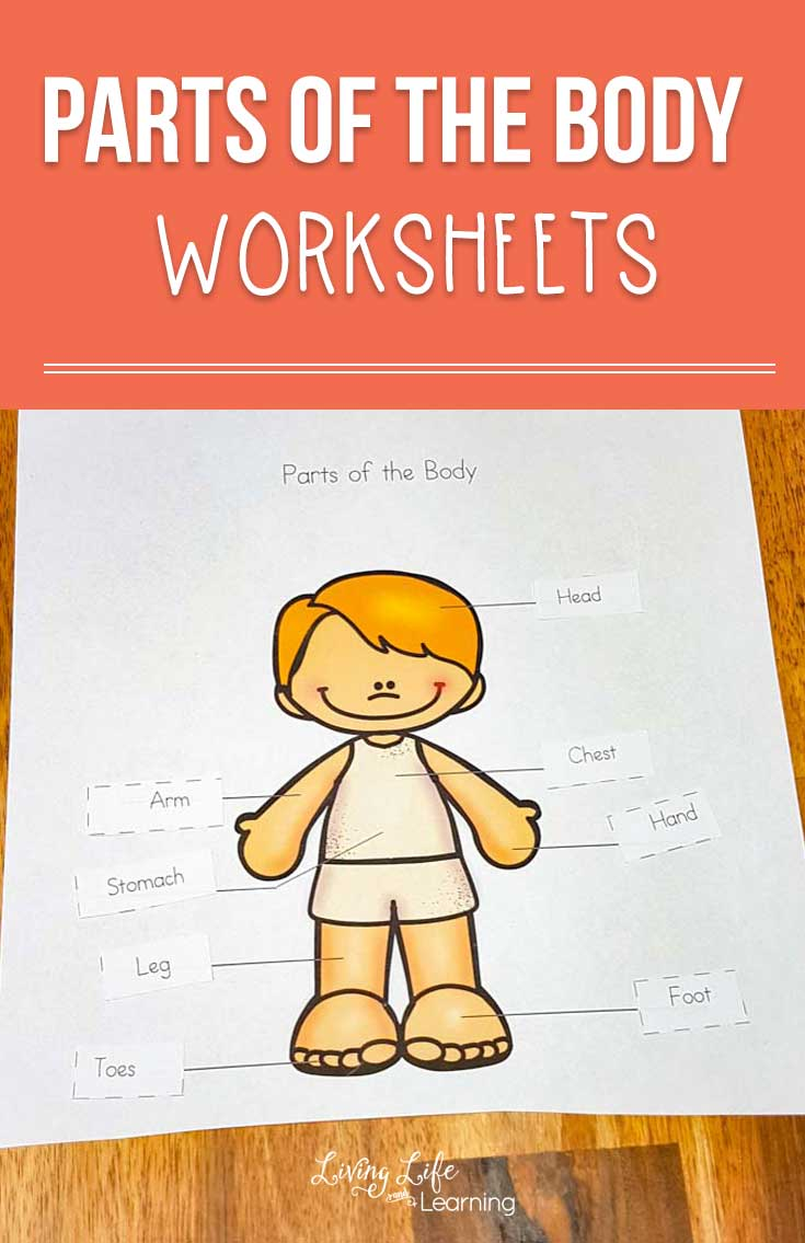 A Fun Parts Of The Body Worksheets set. This is a perfect way to teach kids all about the human body! Label the parts of the body and show your kids where they can be found on the body.