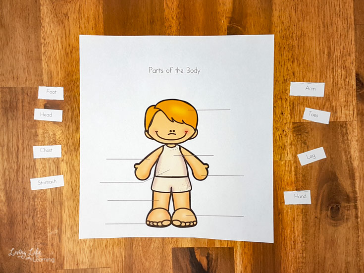 parts of the body learning printables