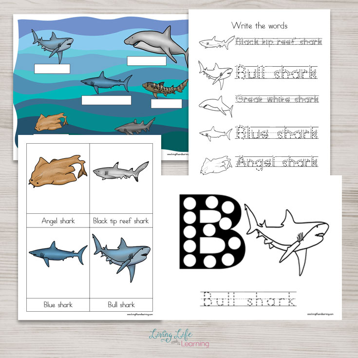 Free Shark Worksheets for Kids