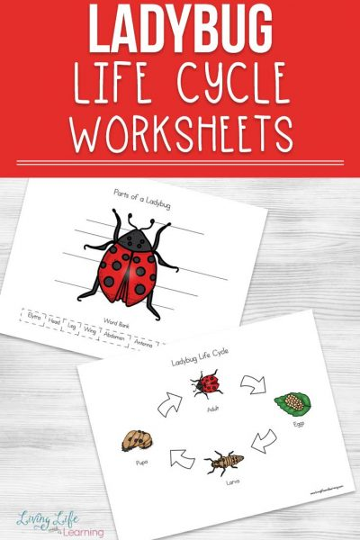 Explore your own backyard and learn more about ladybugs with this fun ladybug life cycle worksheets for kids, find out all about the parts of a ladybug too.