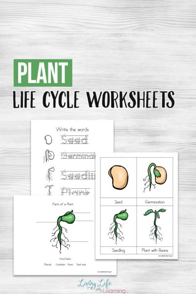 Plant Life Cycle Worksheets for Kids
