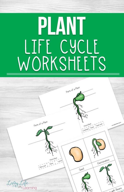 Gardening season is here so learn about plants with these fun plant life cycle worksheets for kids. Get them excited about plants in your own backyard.