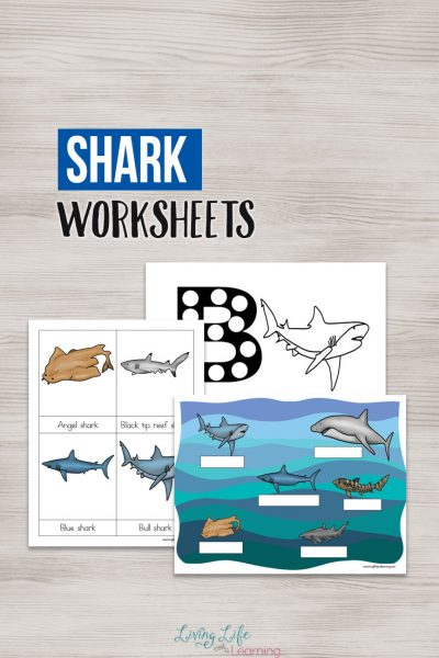 Ocean lovers will love learning about the different types of sharks with these shark worksheets for kids. These fearsome creatures are a favorite ocean animal with kids.