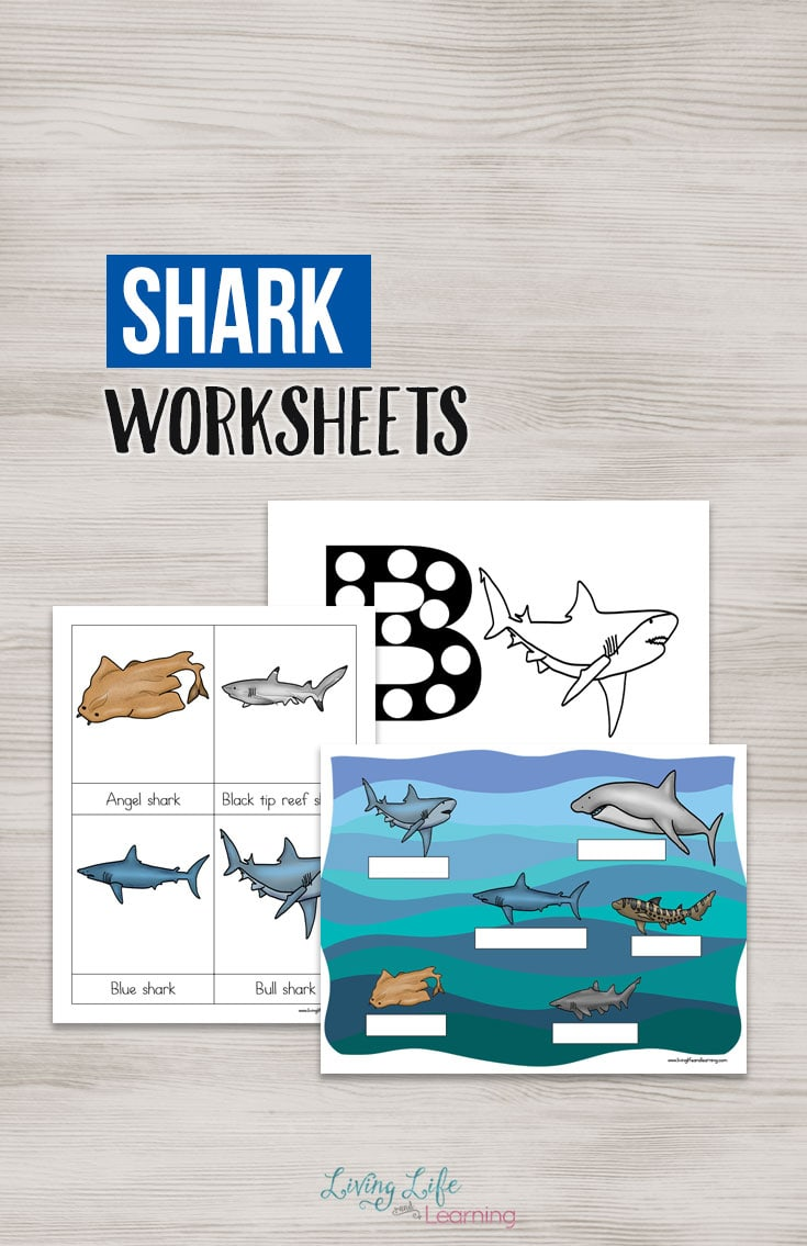 Sharks Worksheets for Kids