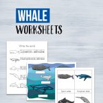 Learn the different types of whales that live in our oceans with these fun whale worksheets for kids. There are a ton of whales to get to know.