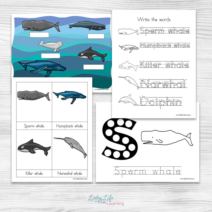 Free Printable Whale Worksheets for Kids