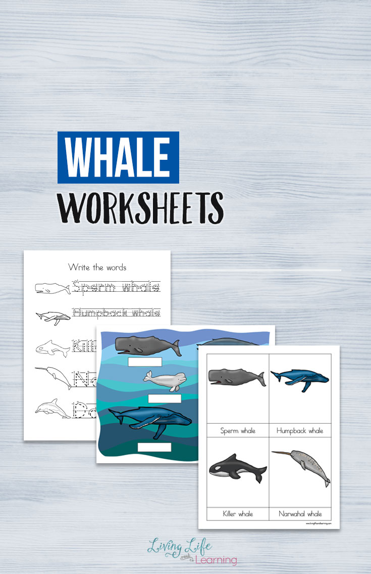 Whales Worksheets for Kids