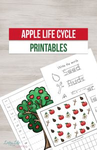 Perfect for fall, learn about apples with these adorable apple life cycle worksheets that will teach your kids how they grow from seed to apple. Use these apple life cycle printables with your preschoolers and kindergarten students to see how they grow.