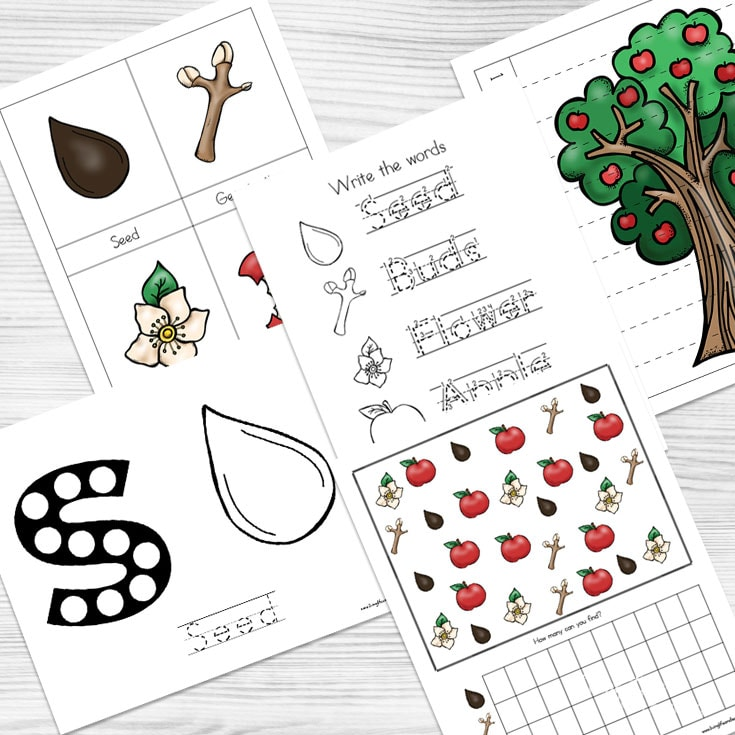 Apple Life Cycle Worksheets your kids will love