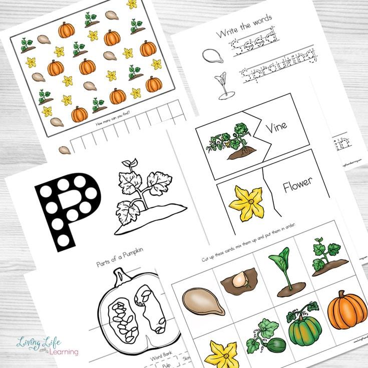 Life cycle of a pumpkin worksheets