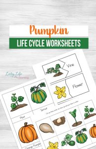 These Pumpkin Life Cycle Worksheets are the perfect way to introduce your child to how a pumpkin starts as a seed and continues to grow!
