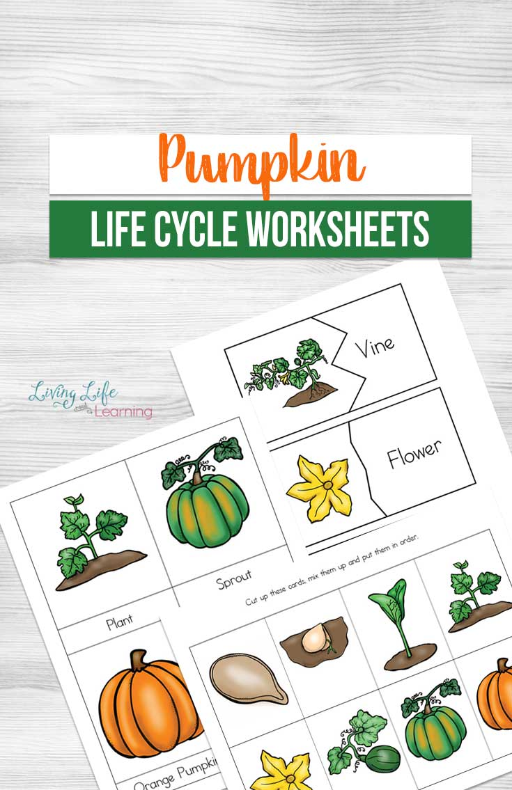 photograph relating to Life Cycle of a Pumpkin Printable referred to as Pumpkin Lifetime Cycle Worksheets