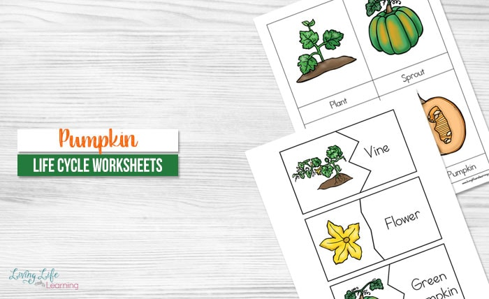 image about Pumpkin Life Cycle Printable named Pumpkin Lifestyle Cycle Worksheets