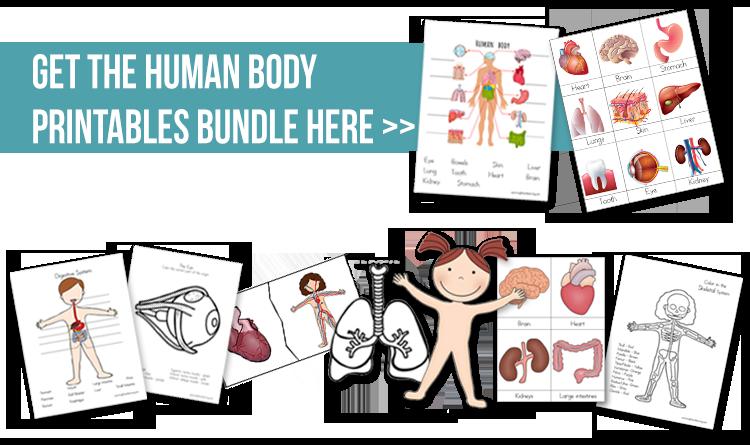 human-body-printable-bundle.jpg