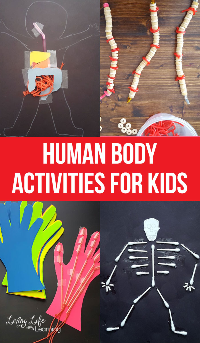 These human body activities for kids are the perfect way to help them learn about everything that the human body does! They'll love the hands-on activities and be intrigued by just how busy the body can be! Perfect for all ages, these STEM learning activities are a must!