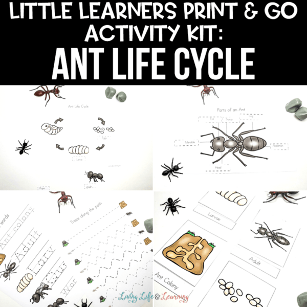 Little Learners Print & Go Activity Kit: Ant Life Cycle