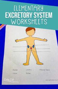Elementary Excretory System Worksheets