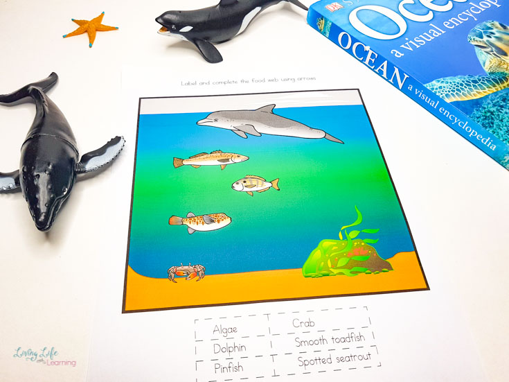 Ocean Food Chain Worksheets