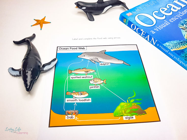 Elementary Ocean Food Web Worksheets