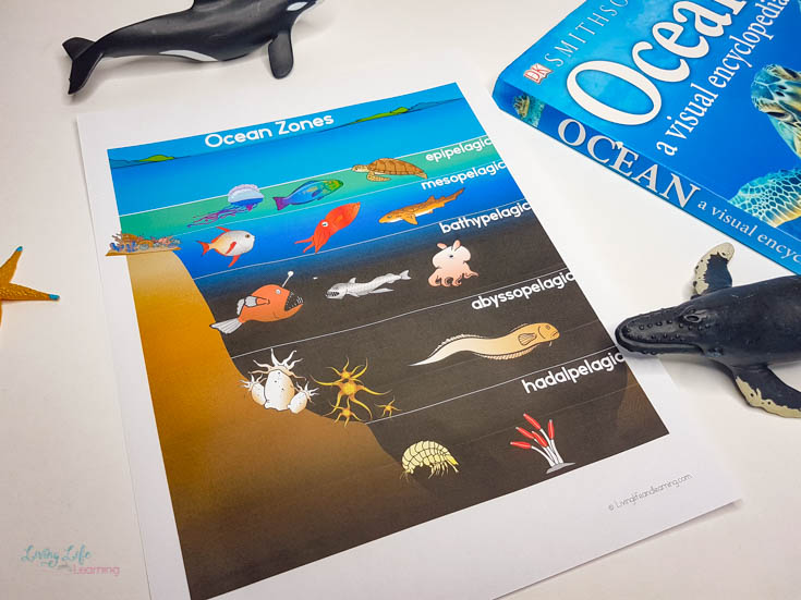 ocean zones worksheets for kids