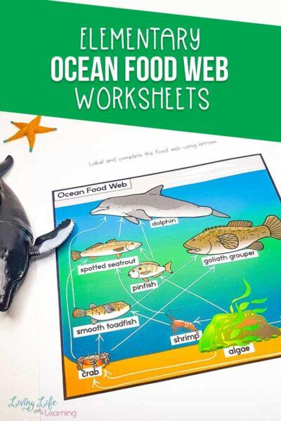 Ocean food web worksheets