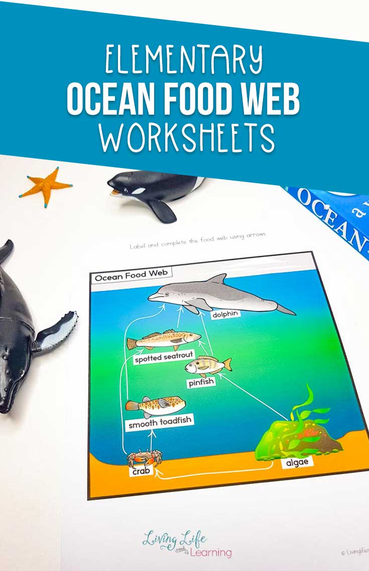 Ocean Food Web Worksheets