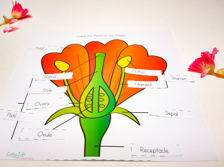 Label the parts of a flower on this worksheet while you're growing your own with your little gardeners.