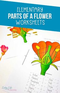Elementary Parts of a Flower Worksheet