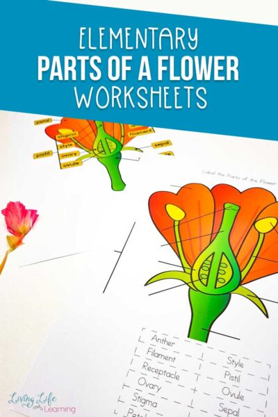 Parts of a Flower Worksheet