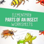 Parts of an insect worksheets