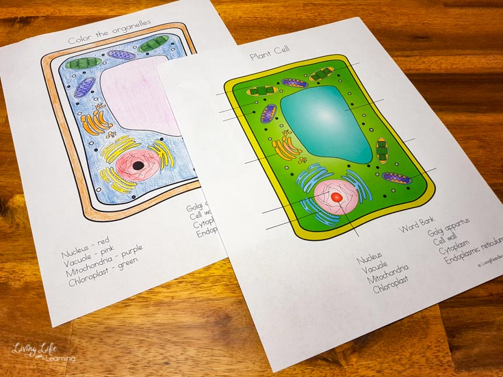 Example of the plant cell coloring worksheet with labelling options.