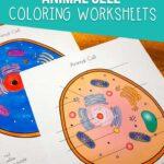 Animal cell worksheets for kids