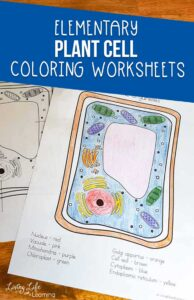 Plant Cell Coloring Worksheets
