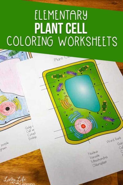 Plant Cell Coloring Worksheet