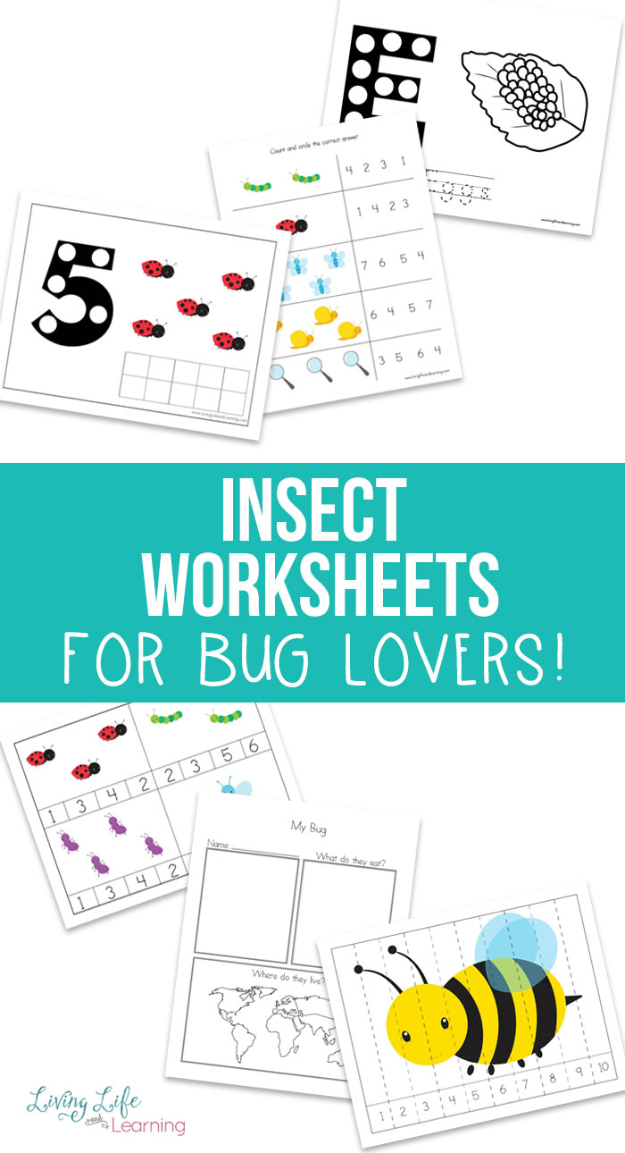 Free Insect Worksheets for Kids