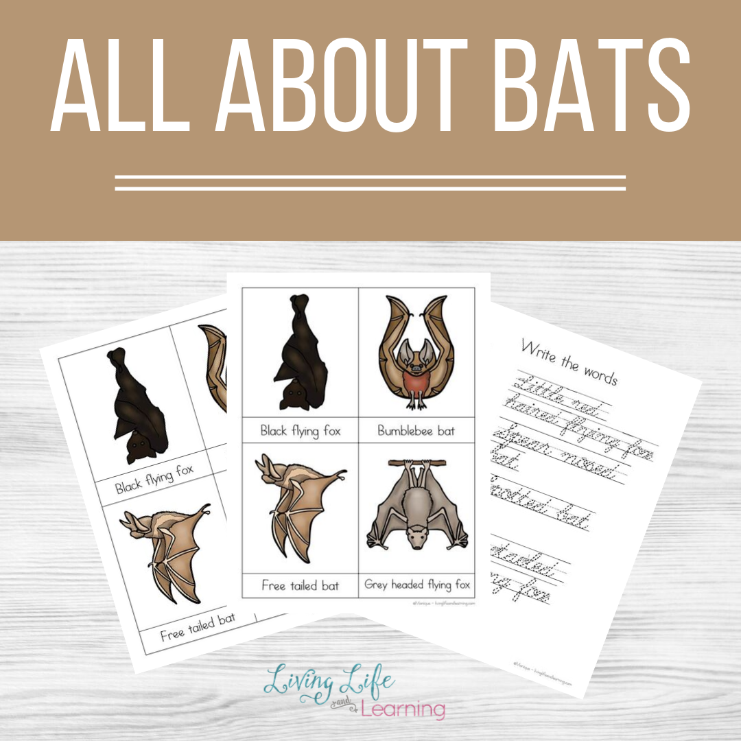 All About Bats Learning Pack