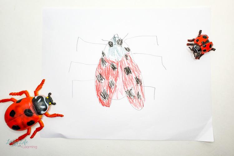 Ladybug notebook drawing